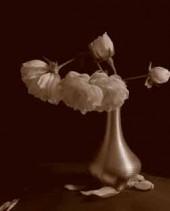 ImprintWhite-Roses