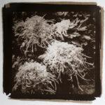 Kong-Nai-Salt-Print-Chrysanthemum